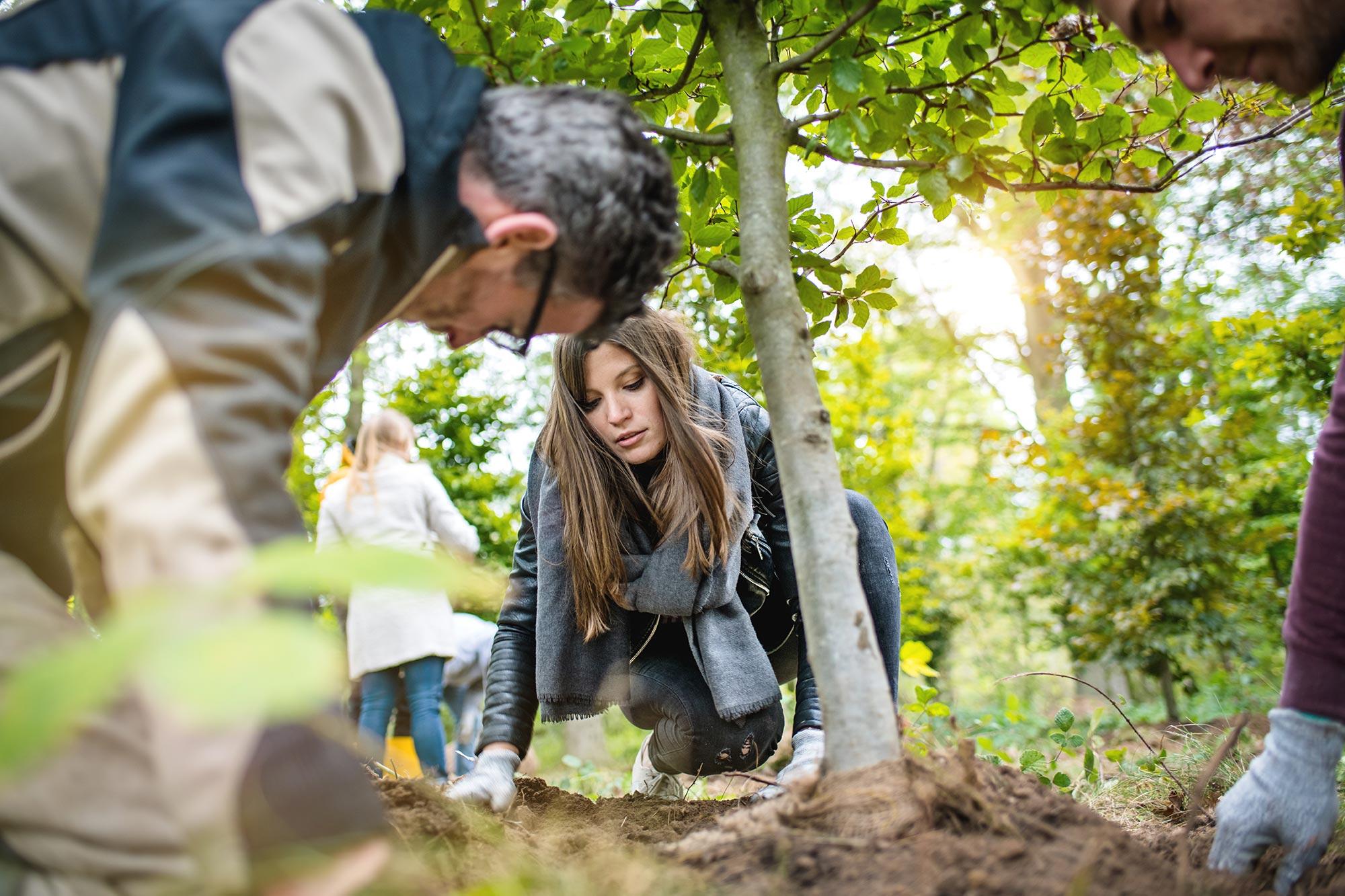 Santiago Advisors Beratungsagentur Imagemotive Baumpflanzen im Wald Project Zero Natur Frau konzentriert
