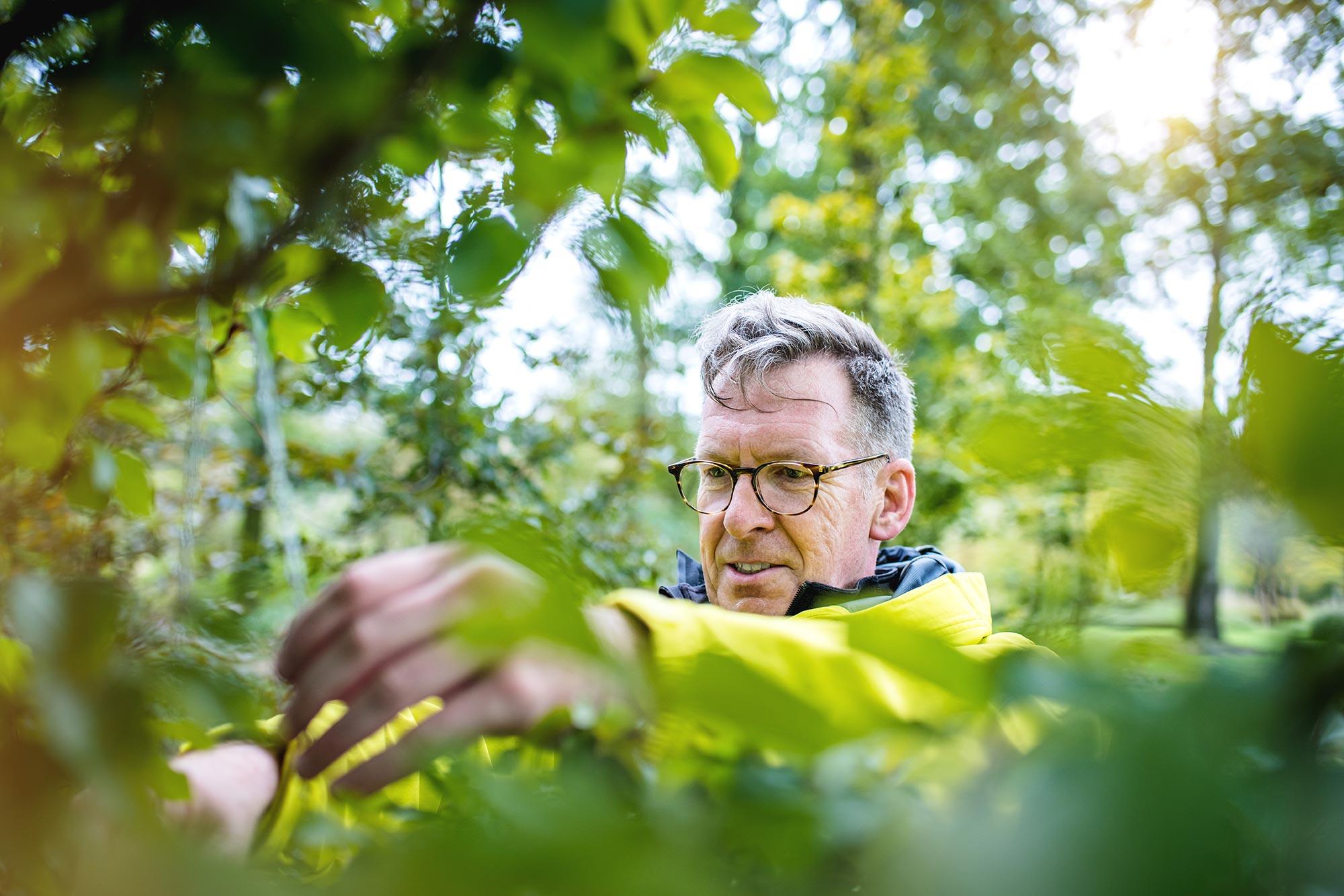 Santiago Advisors Beratungsagentur Imagemotive Baumpflanzen im Wald Project Zero Natur Mann konzentriert